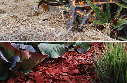 Which Mulch is right for your garden?