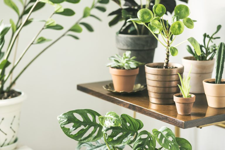 10 Houseplants Safe for Children & Pets