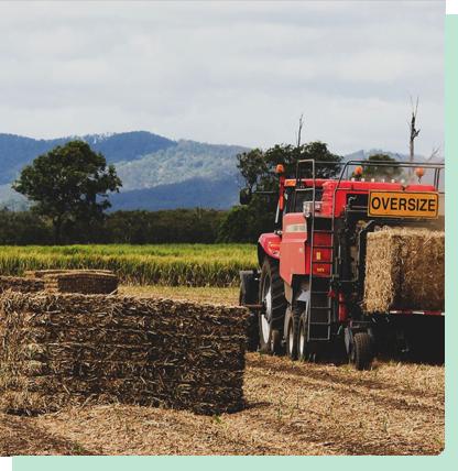 Farming-Sugar-Cane